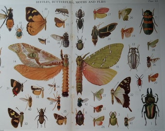 LARGE Vintage 1922 Insect print, insects flying beetles color lithograph print decor
