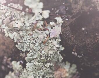 Tree Fungus Color Photo Print { texture, outdoors, moss, trunk, tree, bark, white, brown, wall art, macro, nature & fine art photography }