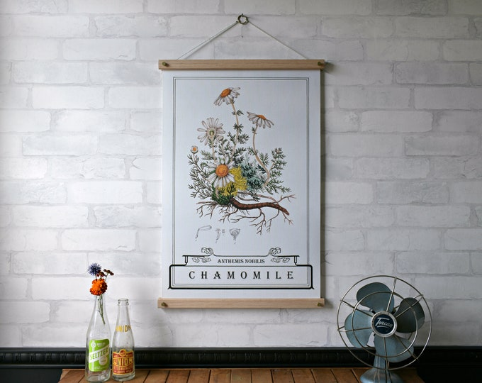 Chamomile Typography Chart - NEW PRINT of the WEEK 20% off until Aug. 25
