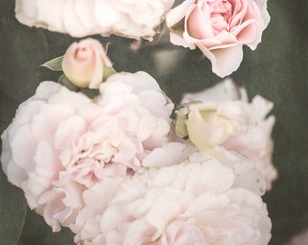 Pink, Soft, Roses, June, Summer Flowers, Floral Print, Fine Art Photography, 11x14