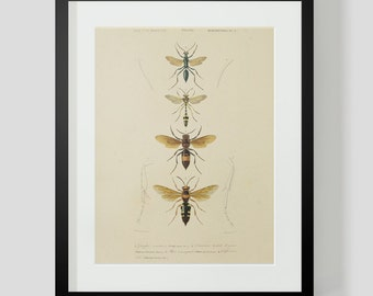 Vintage Insect Bee Entomology Plate 2