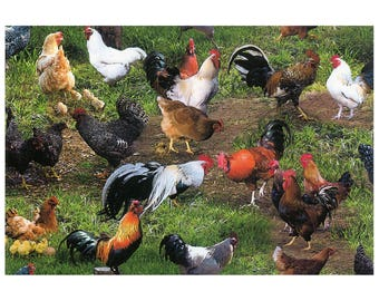 Farm Animals - Chickens 365-GRE by Elizabeth's Studio Cotton Fabric Yardage