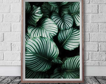 Botanical Poster Download, Digital Art Print, Printable Leaf, Leaves Print, Elephant Ear, Monstera Print, Tropical Wall Art, Green Photo