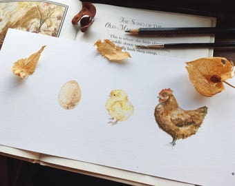Hen Family Illustration Print