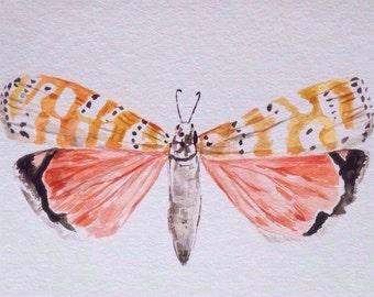 Original Painting - Moth Art - Wall Art- Moth Illustration - Watercolor Painting- Original Art - Watercolor Art- Insect Art -