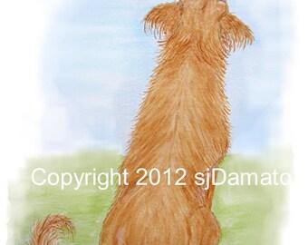 Golden Retriever Cards CURIOUS DRAGONFLY - Dog Cards set of 8