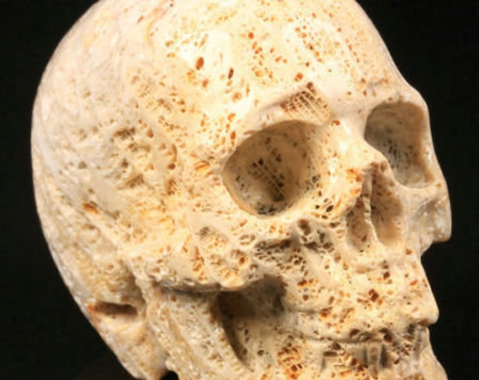 Coral Fossil Carved Skull  #094