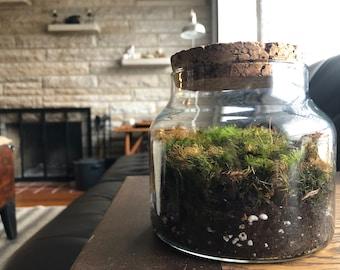 Glass Moss Terrarium - Large