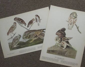 Two Vintage Bird Illustrations - Owl Pictures For Framing - Audubon Book Plates 1971