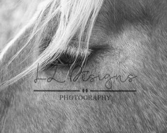 Side Profile of Horse Digital Download