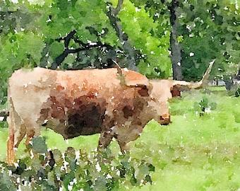 Oxen Watercolor Print