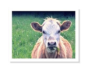 Cow Photo Signed Print Farm Photo Original Photography Wall Art Rustic Photo Animal Photo