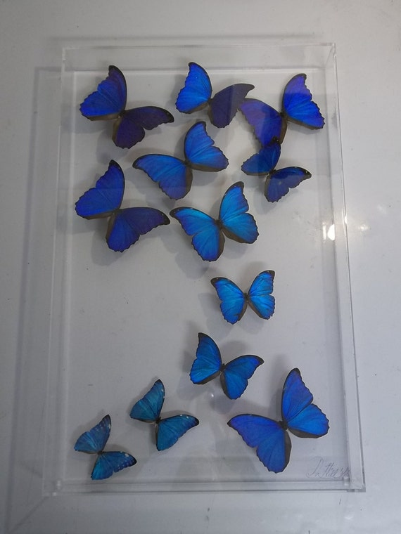 Morpho Butterflies large panel 18x3x28