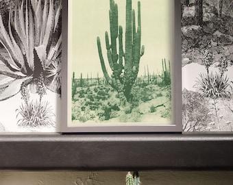 Cactus Art, Cactus Print, Cactus Poster, Cactus Wall Art, Succulent Print, Large Cactus, Southwest Cactus, Antique cactus, Southwest