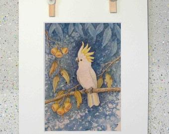 Cockatoo, original watercolour painting fine art print on paper by Elena Parashko, Australian native bird, Sulphur Crested Cockatoo, bird