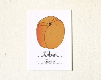 Kitchen Art prints illustration Summer Fruits Apricot Fruit 5x7 Giclee French kitchen Retro orange Foodie