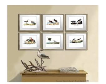 Beach Wall Art Neutral Living Room Decor Wall Art Sea Birds set of 6 Prints, Antique Audubon Bird print, Coastal Dining room decor wall art
