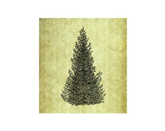PINE TREE Rubber Stamp~Cling Stamp~Rustic Forest Evergreen Nature Illustration Mountain Christmas Spruce Large Trees Hiking Camping (50-05)