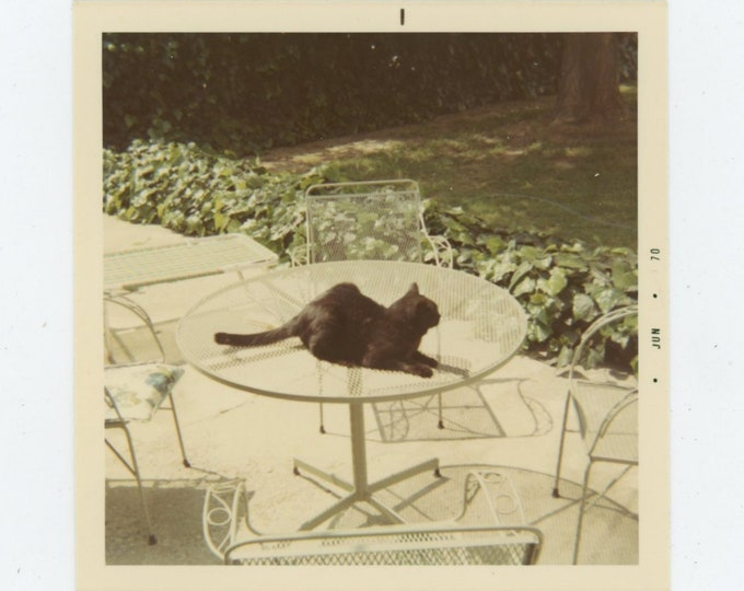 Vintage Snapshot Photo, 1970: Cat on Table [84663]