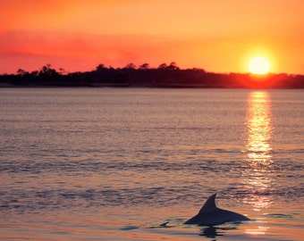 Dolphin at Sunset Photograph - fine art photography, Orange Blue Yellow Wall Art, Wildlife Nature Print, South Carolina Seabrook Island