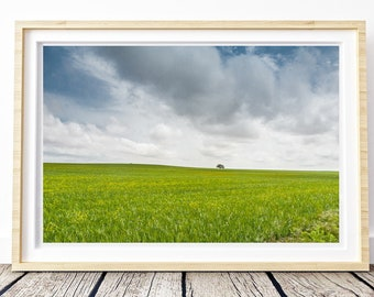 Castilian fields. Castilla la Mancha. Landscapes of Spain. Sun and light. Printable image for download. From Spain with Love