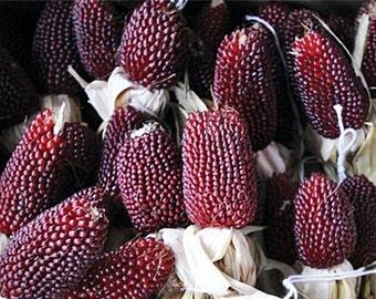 Strawberry Popcorn Heirloom Corn Seeds Non-GMO Open Pollinated Gardening