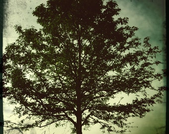 "Tree Photograph - Metallic photographic print ""Strength"""