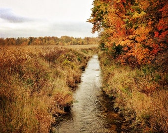 Nature photography, rural photograph,country photo, landscape, countryside, surreal, stream, tree, fall, textured, orange, autumn, Ontario