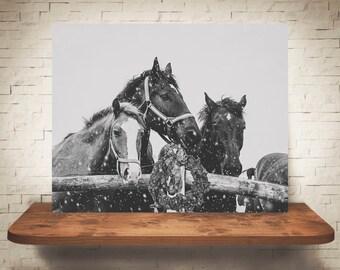 Horse Photograph - Fine Art Print - Black White Photography - Wall Art Decor - Horse Pictures - Farmhouse Decor - Horses - Christmas Decor
