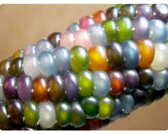 Corn Seeds Glass Gem Corn, Native American Heritage, Cherokee, Highly Sought After, Heirloom, Organically Grown 10 Seeds