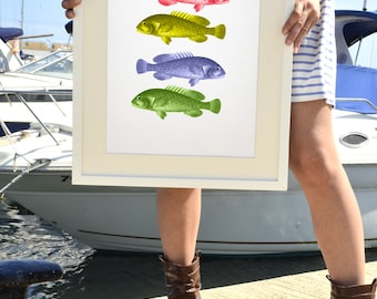 Colorful fishes - Vintage Seaside A3 Plus sized poster wall art - Sea fish collage- Sea life print SAS016A3P
