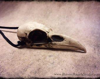 Raven Skull Necklace - Resin Replica Unusual Gift - Goth Taxidermy Crow Poe Bird Skull Odin Viking Gift