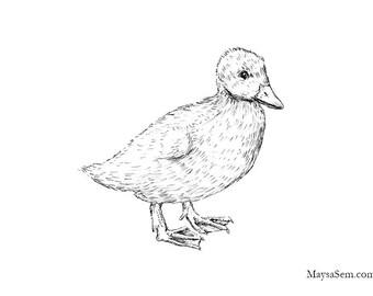 Duckling - Art Print