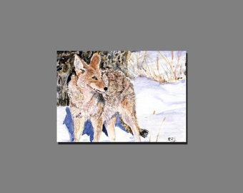 Coyote - ACEO Limited Edition | 2.5 X 3.5 Inch Giclee' on Epson Archival Matte Paper - BRJ