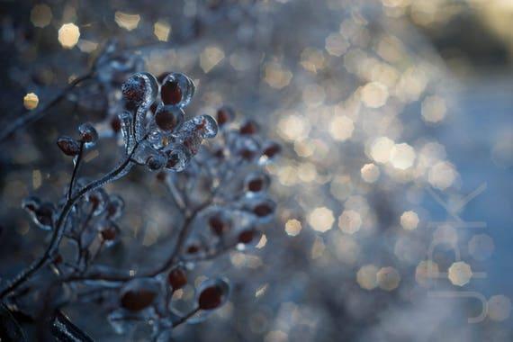 Frozen holiday, Western Massachusetts