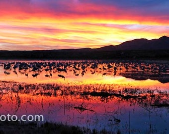 Bosque del Apache Sunset, Socorro, New Mexico Color Photograph