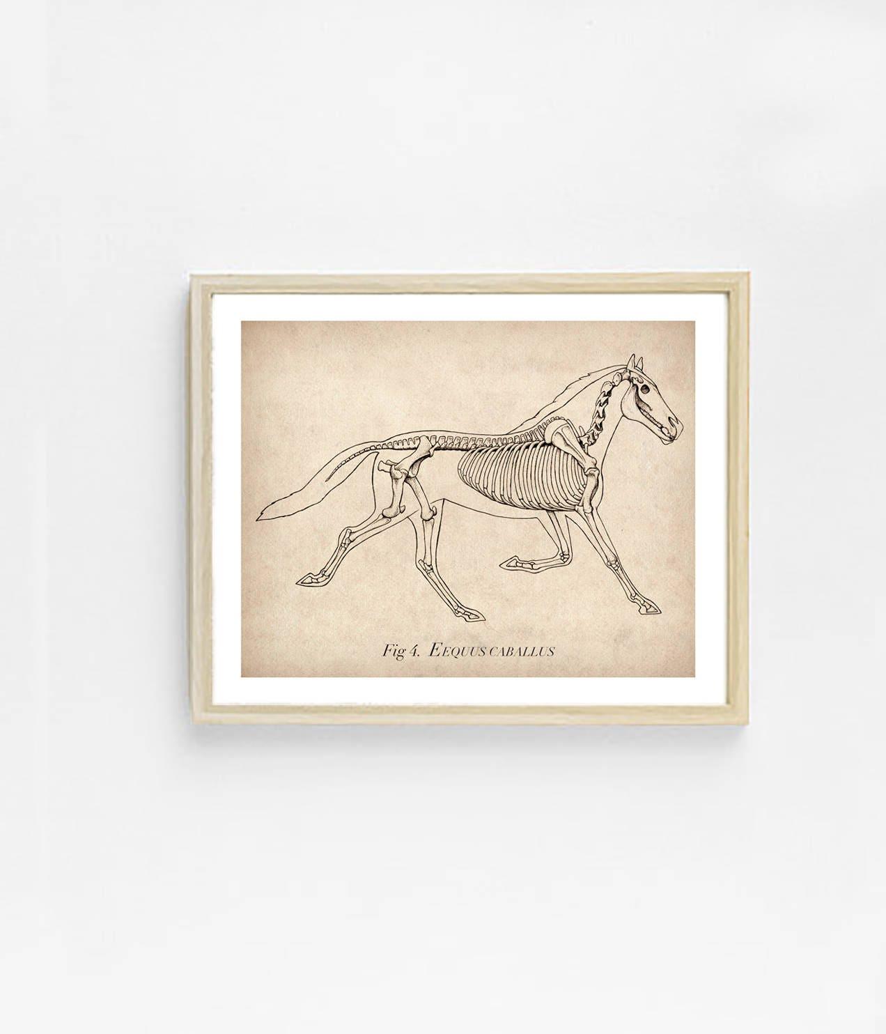 Atemberaubend Pferd Anatomie Poster Galerie - Menschliche Anatomie ...