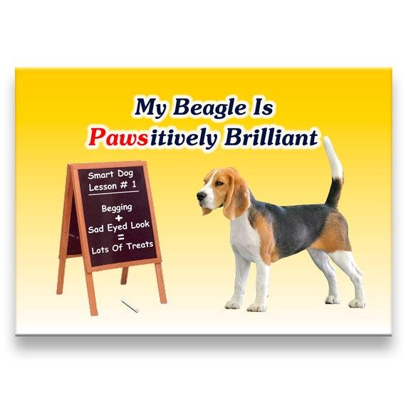 Beagle Pawsitively Brilliant Fridge Magnet No 1