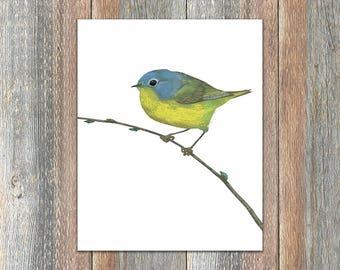 Nashville Warbler Bird Print