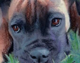 original art  aceo drawing black and tan boxer pup dog
