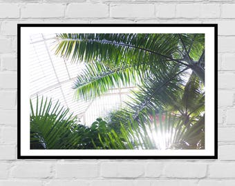 Botanic Gardens Greenhouse Ferns photography digital art print
