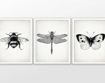 Insect Art Print Set of 3 - Dragonfly - Butterfly - Bumble Bee - Entomology - Insect Print - Set Of Three Prints #1600 - INSTANT DOWNLOAD