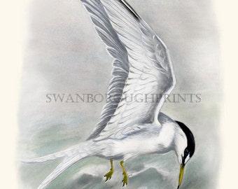 Coastal Decor Seagull Bird Illustration Print.  Nautical Sea Bird Art Print from Watercolored Engraving Beach House Decor Bathroom Wall Art