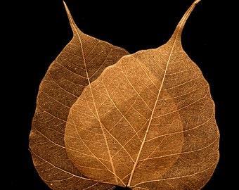 Copper Bodhi Skeleton Leaves