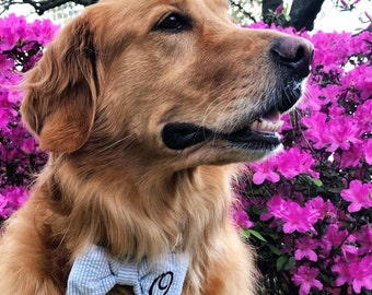 Monogrammed Dog Bow Tie Blue Seersucker || Personalized Preppy Bowtie || Custom Gift by Three Spoiled Dogs