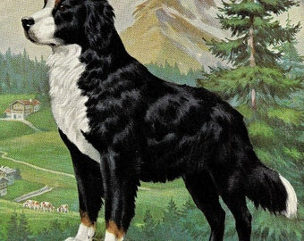 Authentic Dog Art Vintage Dog Print Walter A Weber Vintage Canine Art Dog Breeds Dog Decor Bernese Mountain Dog Working Dog  Dog Picture