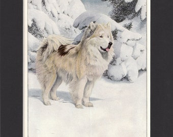 Greenland Dog 1919 Vintage Print by Louis Agassiz Fuertes Small Print of a Signed Painting Mounted with Mat Eskimo Husky Print