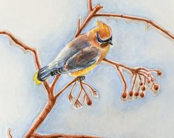 Bird art, cedar waxwing, winter bird