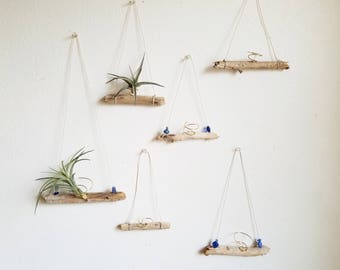 BACKORDER Driftwood Air Plant Holder, Small Airplant Hanger, Natural Boho Decor, Summer Decor, Beach House Wall Decor, Gardening Gift