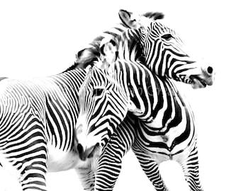 Black and White Zebras, Nature Photography, Zebra Print,  Nursery Decor Fine Art Print Photograph. Black & White Wall Art ~ Animal Photo